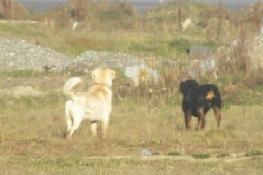 Perros asilvestrados_1