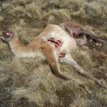 Efectos sobre fauna silvestre
