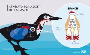 Infografía: Prensa CONICET